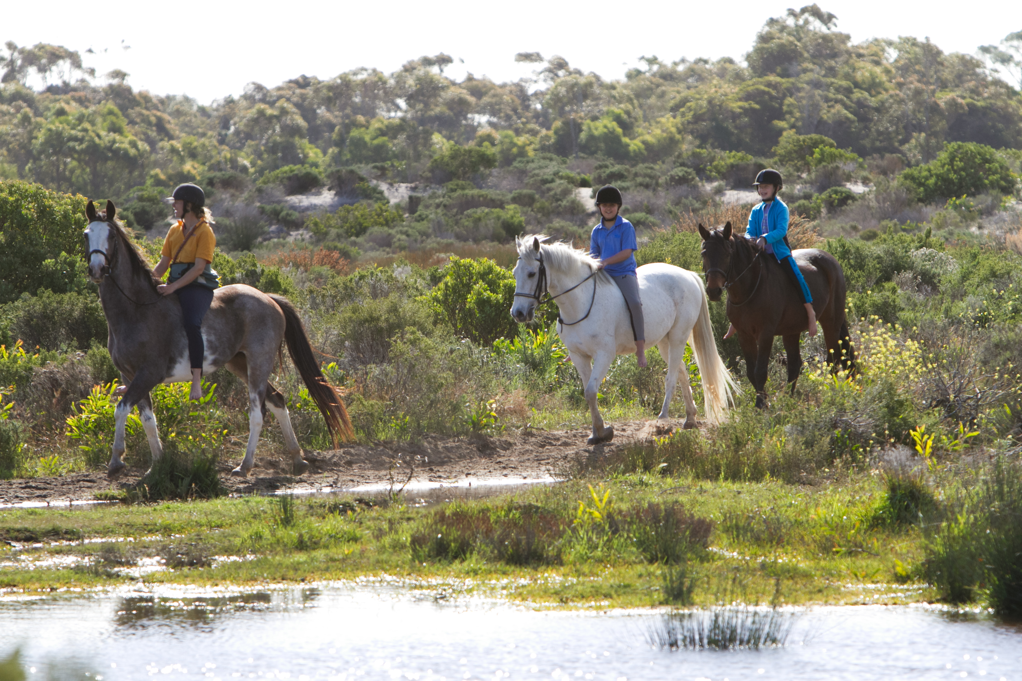 Noordhoek's horses generate more than R45million per year & create employment